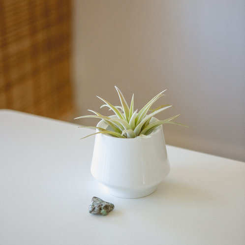Attract | Emerald Crystal | Air Plant