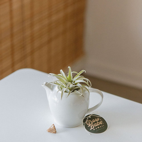 Diana | Picture Jasper Crystal | Air Plant