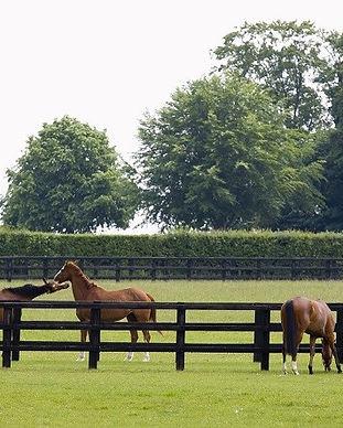 Horses-in-paddock-sm.jpg