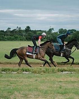 Round Gallop.jpg