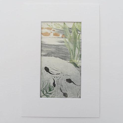 The Pond -Inhabitants