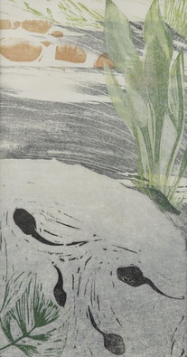 The Pond - Inhabitants