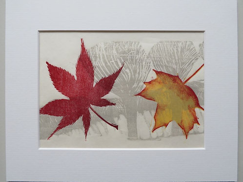 Autumn Leaves - Sycamore and Maple