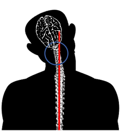Spinal 2.png