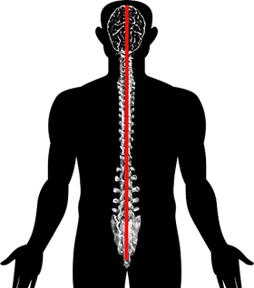 Spinal.png