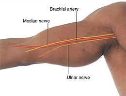 brachial-artery-location-in-the-arm.jpg