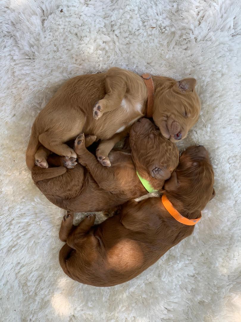 Arki (green) Monty (brown) Rusty (orange)