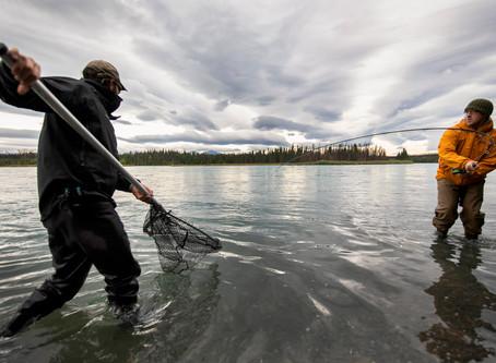 Salmon Fishing on the Kenai River