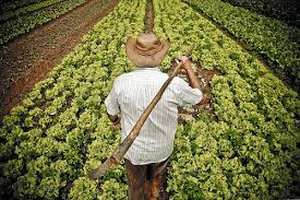 Candidatos homens e agricultores são os mais frequentes em PE