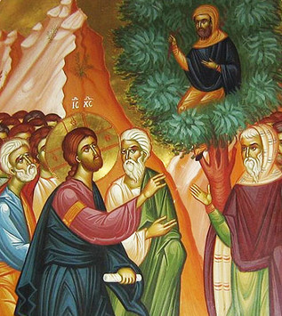 Zacchaeus: To See and To Be Seen