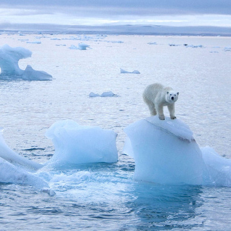 Breaking the Ice: How the Arctic is Changing