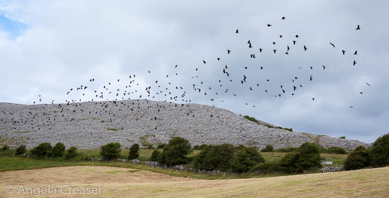 A Murder of Crows, The Burren