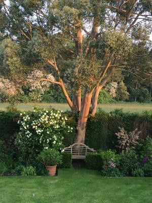Eucalyptus & Vibernum