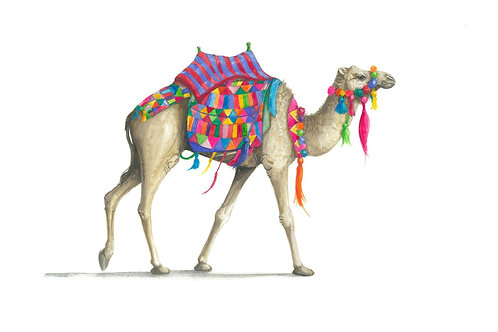 Limited Edition Colourful Camel Print