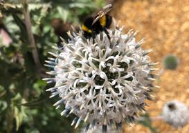 Plant for Pollinators