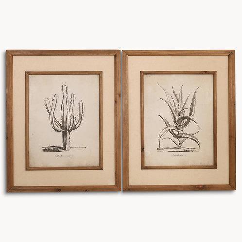 Set of Two Large, Framed Cacti Prints
