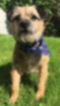 Dog groomer near leamington