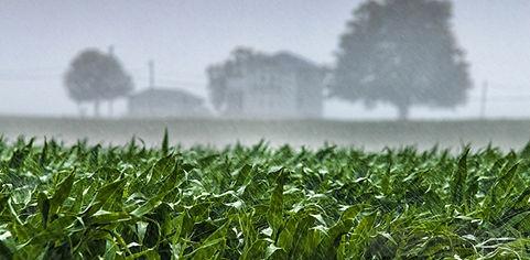 crop-rain.jpg