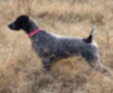 Scarlet in the field