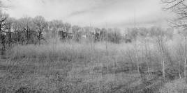 BxPark.Field.10March2010.jpg