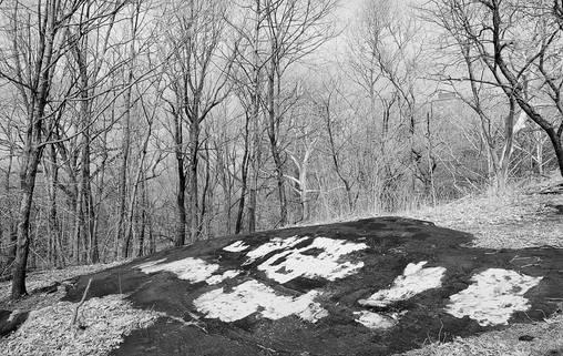 BxPark.Woods.10March2010.jpg