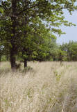 PBPK.Grassland1990.jpg