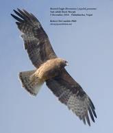 Eagle.Booted.3Dec2014c.jpg
