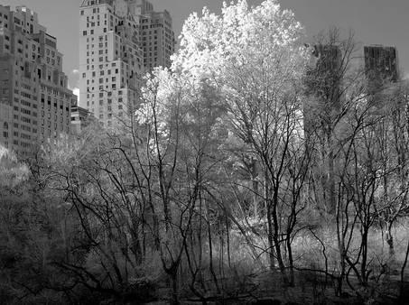 59street.Jan2008.jpg