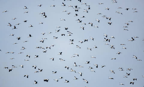Stork.OpenBill.13Sep2014b.jpg