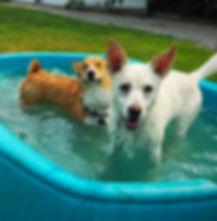 Richmomd Dog Boarding and Play