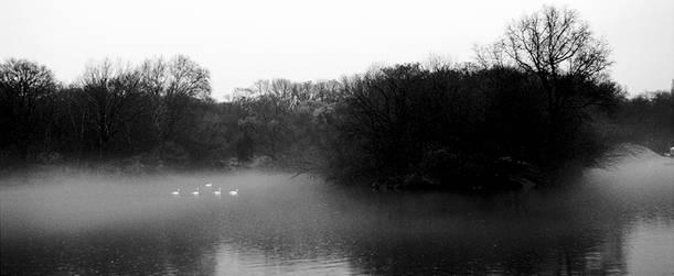 Swans.March2000.jpg