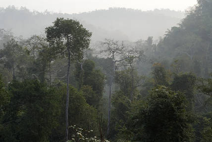 ChiangDao.forest.30Jan07.jpg