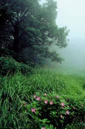 PBPK.Fog.Mallow.jpg