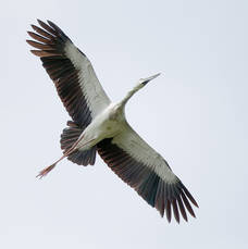 Stork.OpenBill.18Sept2012.jpg
