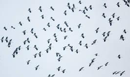Stork.OpenBill.13Sep2014.jpg