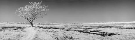 Panorama.IR.Rice.Fields.18Jan2013.jpg
