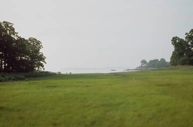 PBPK.Marsh.Hunter.summer198.jpg
