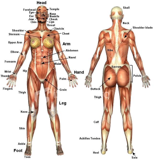 Human body in English.jpg