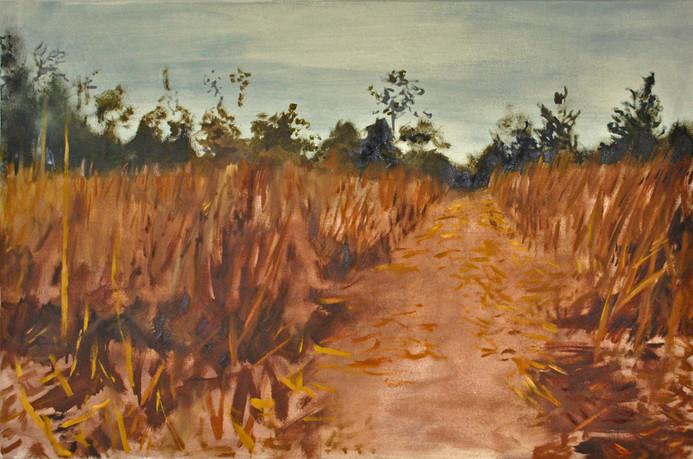 Fields Fallowing 1