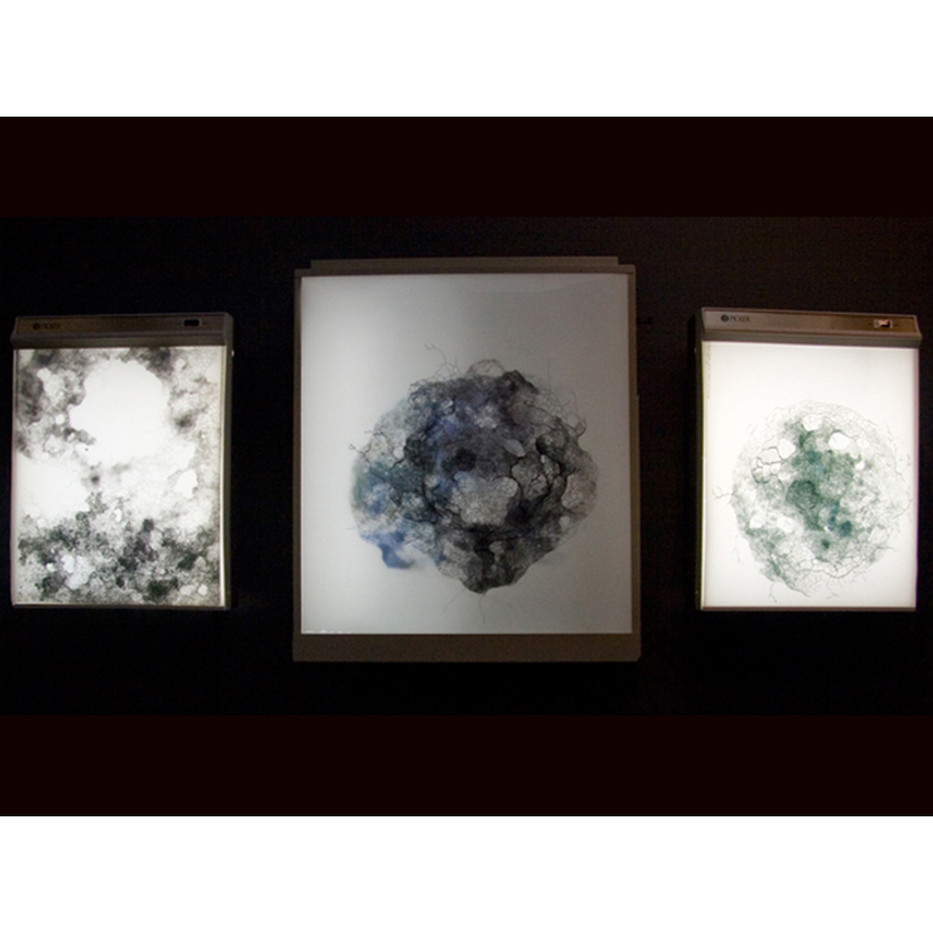 Installation view: 3 Capillary Exchange drawings on x-ray lightboxes