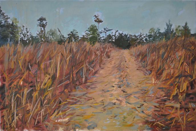 Fields Fallowing 2