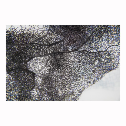 Detail: Capillary Exchange 3