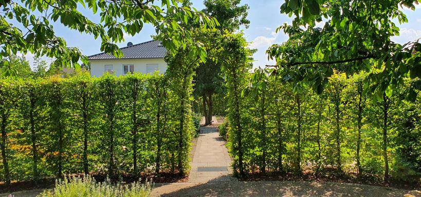 Gewerke Garten 040.jpg