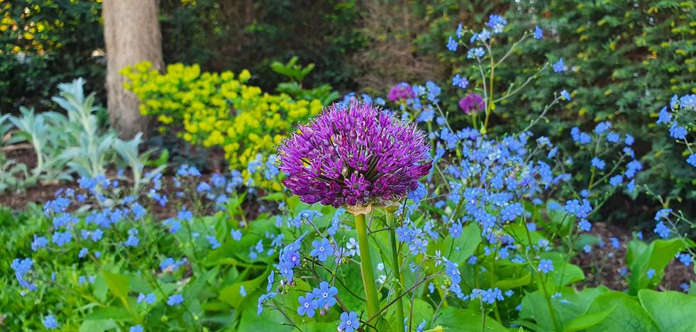 Inspiration Garten 007.jpg