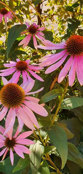 Inspiration Garten 018.jpg