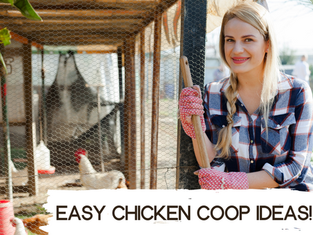 Small yard Tipps: easy chicken coop ideas!