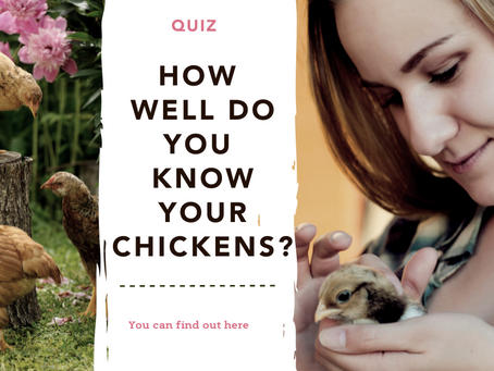 Quiz: How well do you know your chickens?