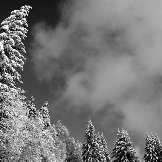 ZIG-SNOW2-010.jpg