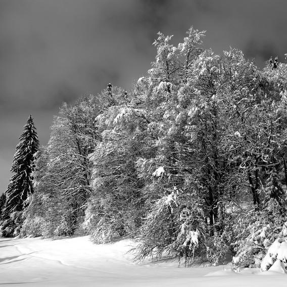 ZIG-SNOW2-007.jpg