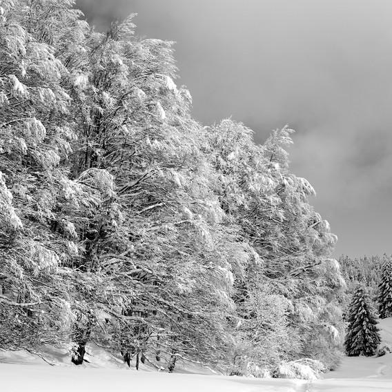 ZIG-SNOW2-011.jpg